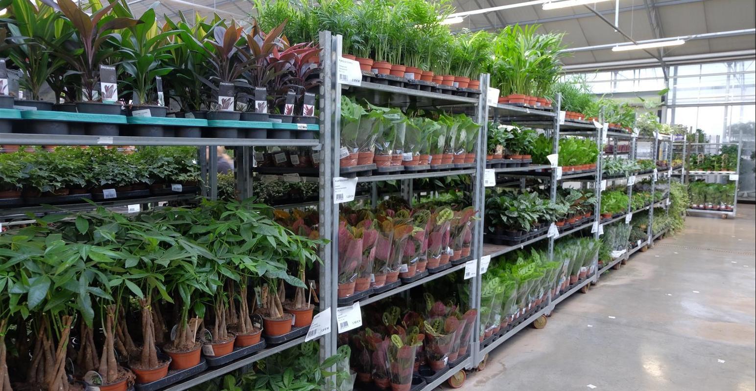 grossiste fleurs Rhône, grossiste plantes Rhône,