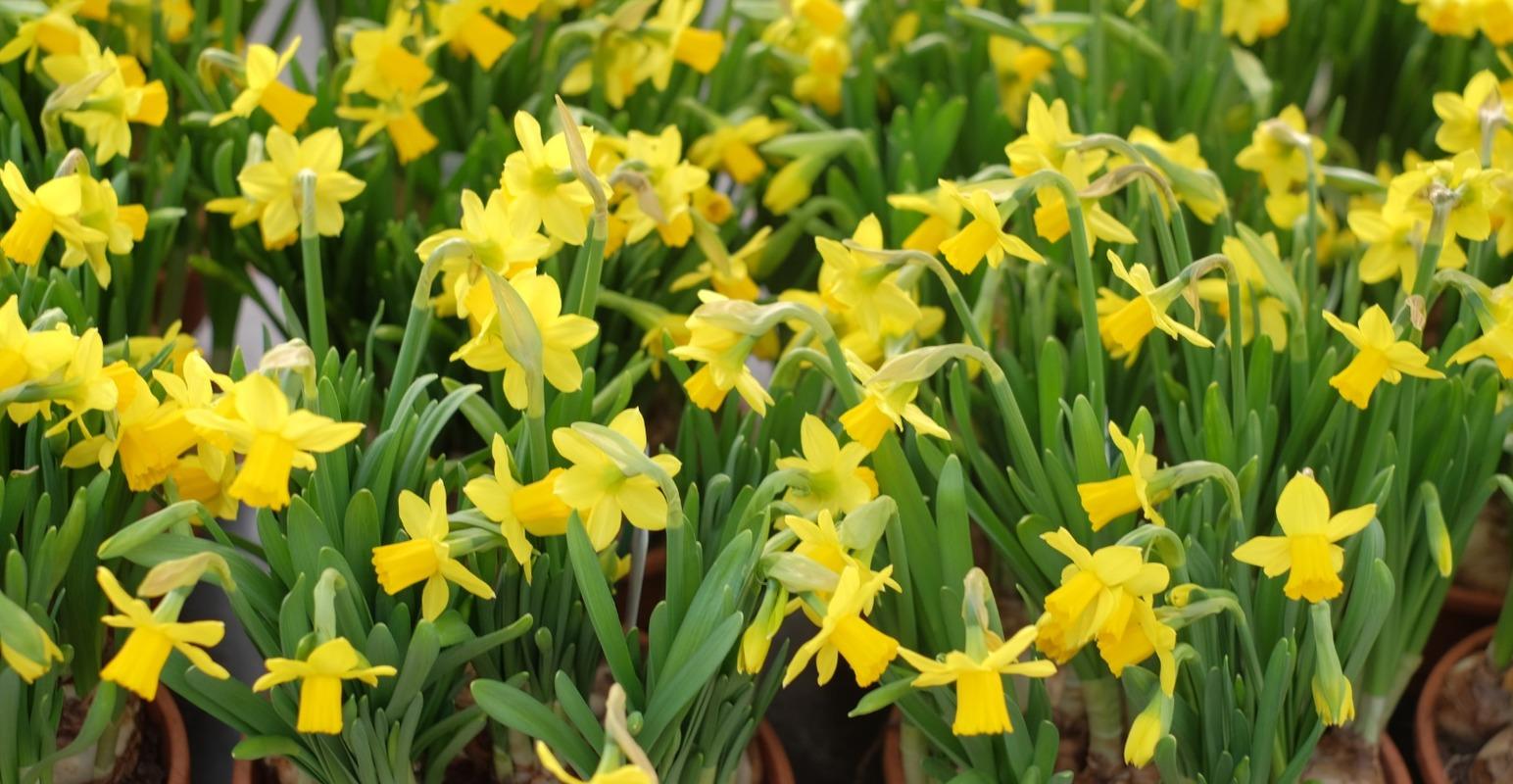 Grossiste fleurs Grenoble, grossiste plantes Grenoble.