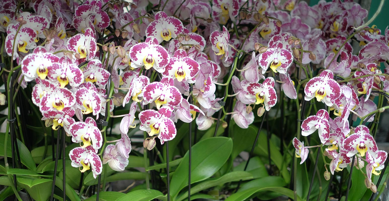LGD - Grossiste en plantes